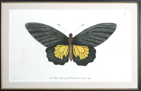 ANTIQUE MOTH II