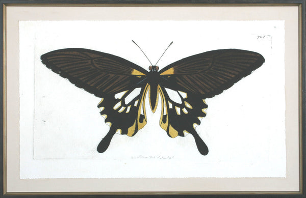ANTIQUE MOTH III