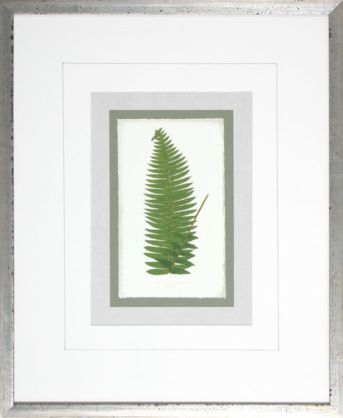 FERN 9  **EXCLUSIVE**