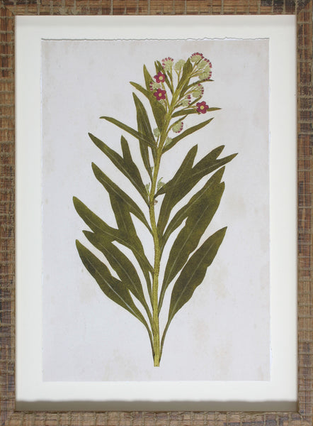BOTANICAL IMPRESSION I