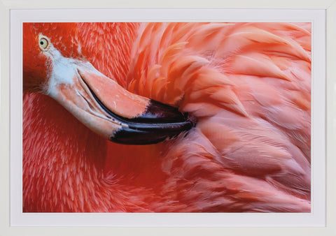 CLOSE UP FLAMINGO