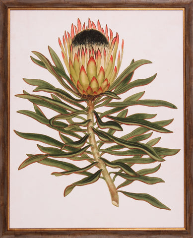 ANTIQUE PROTEA VI
