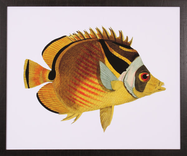 SOLITARY TROPICAL FISH II