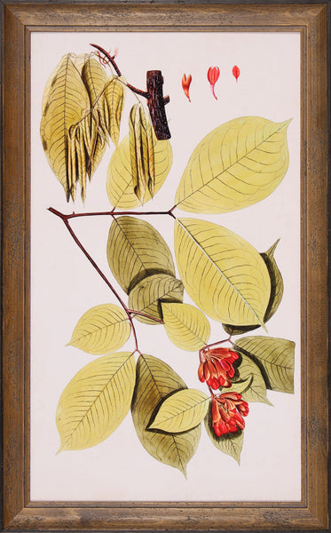 LEAF VARIETIES II