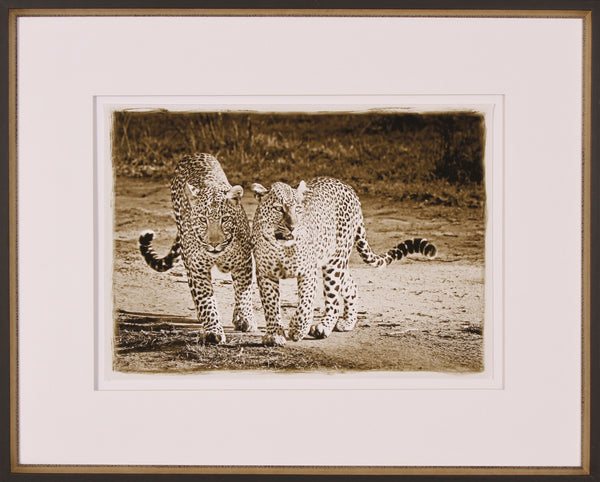 PLAYFUL LEOPARDS