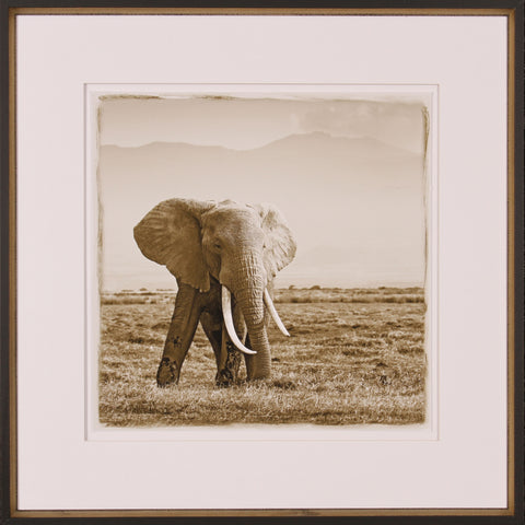 BIG TUSKED ELEPHANT