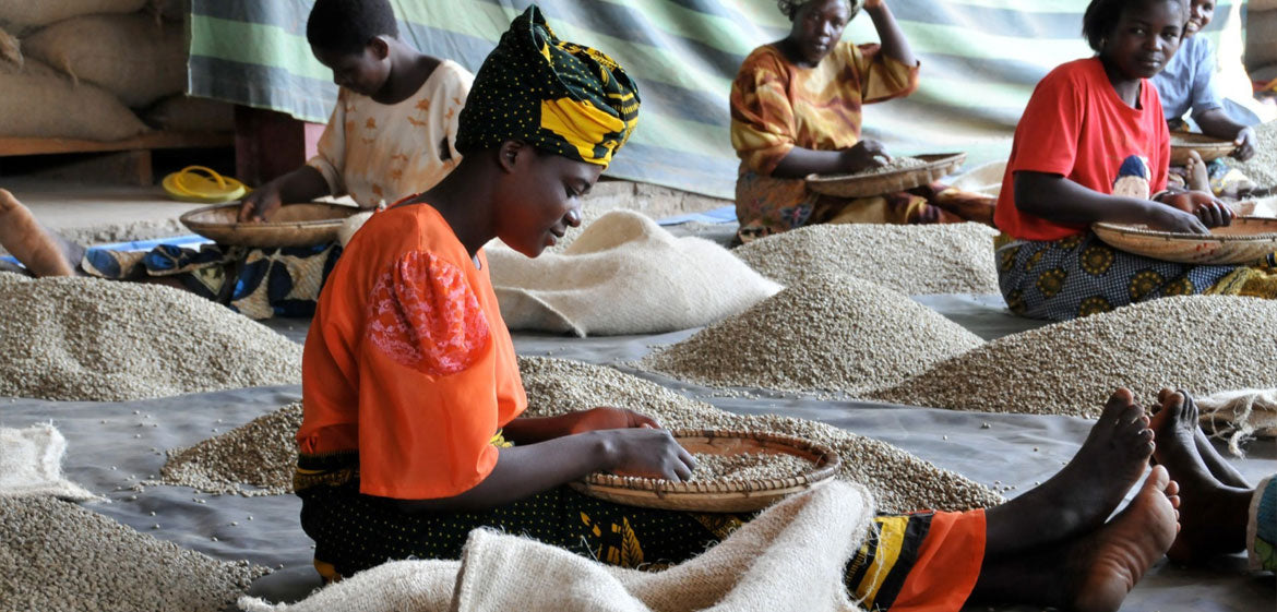 Level Ground Trading | Fair Trade Coffee