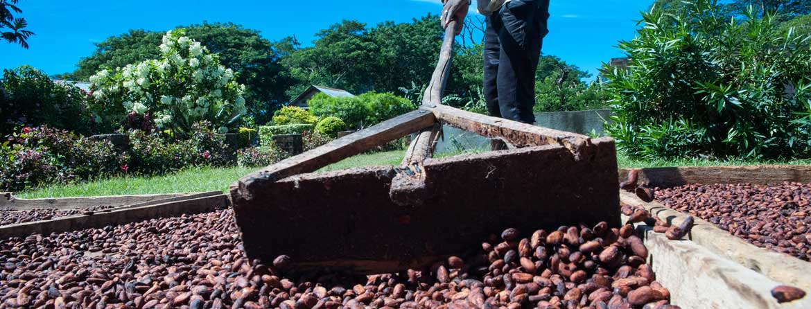Madecasse - Organic Fair Trade Cocoa Farmers
