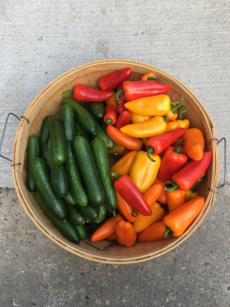 Greenhouse Box - March 18 - April 8, 2020