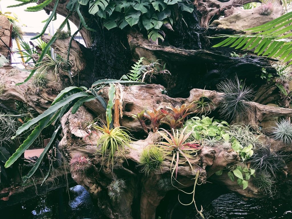Rainforest Flora