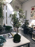 workshop de kokedama 26/10