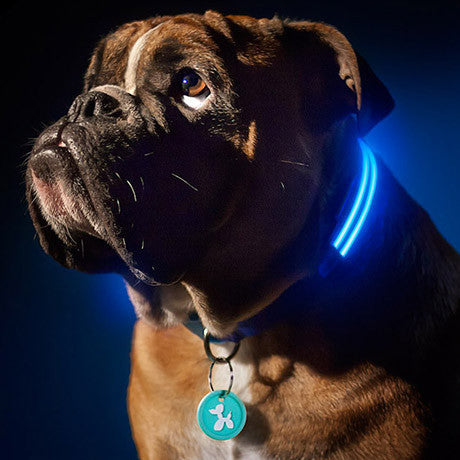 LED Dog Collar - Assorted Colors and Sizes - 25 Main Street  - 1
