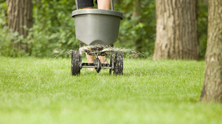 Tips for Fertilizing Your Lawn