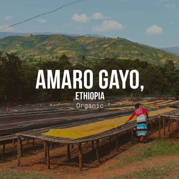 Amaro Gayo, Ethiopia | Organic - Irving Farm Coffee Roasters