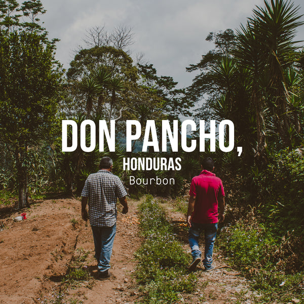 Don Pancho, Bourbon, Honduras - Irving Farm Coffee Roasters