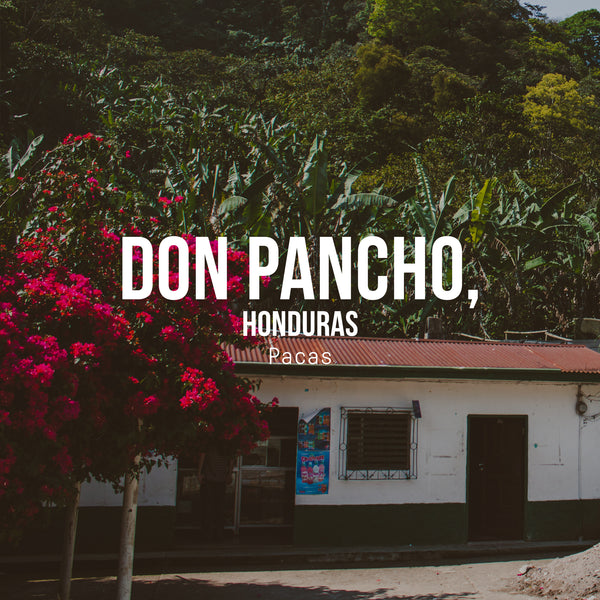 Don Pancho, Pacas, Honduras - Irving Farm Coffee Roasters