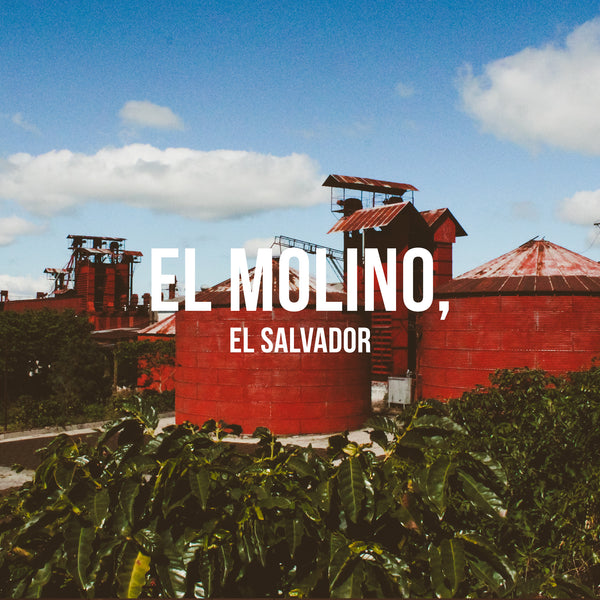 El Molino, El Salvador - Irving Farm Coffee Roasters