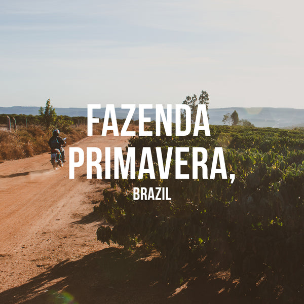 Fazenda Primavera, Brazil - Irving Farm Coffee Roasters