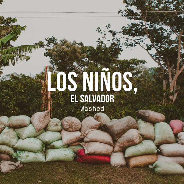 Los Niños Process Experiments, El Salvador | Washed Process - Irving Farm Coffee Roasters