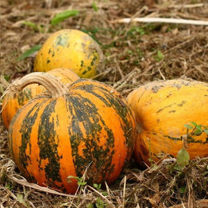 Eastern Europe's Unsung Hero: Pumpkin Seed Oil