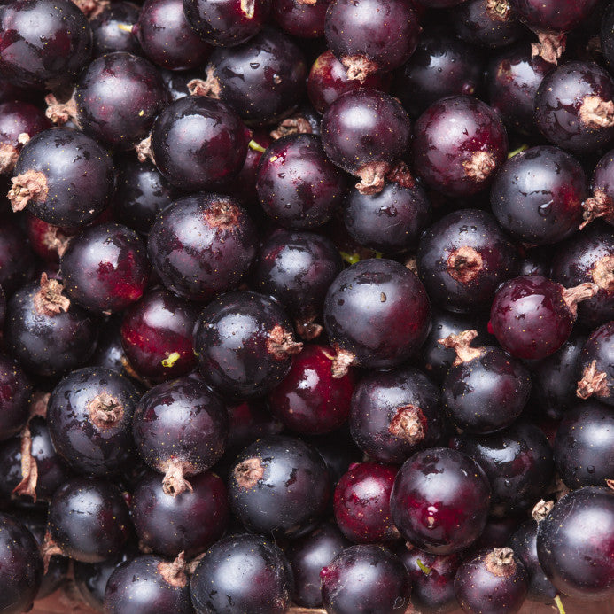 Black Currant Balsamic - A Taste of Olive  - 1