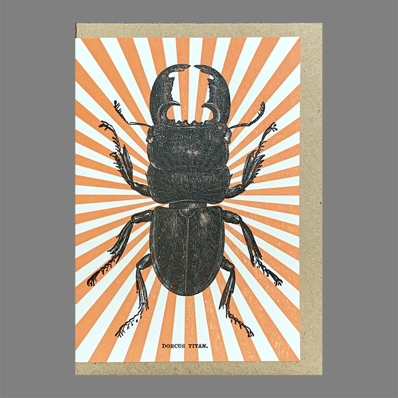 Orange Starburst Stag Beetle Card