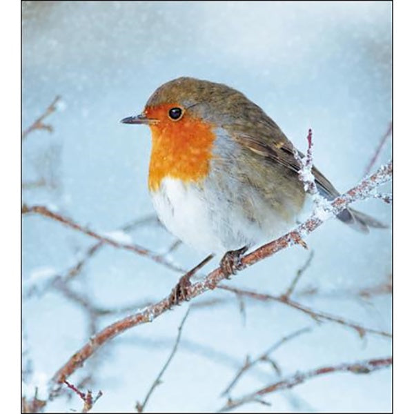 RSPB Robin Box of 8 Cards