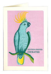 Sulphur-Crested Cockatoo Card
