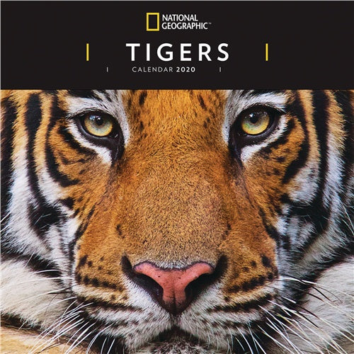National Geographic Tigers Wall Calendar 2020