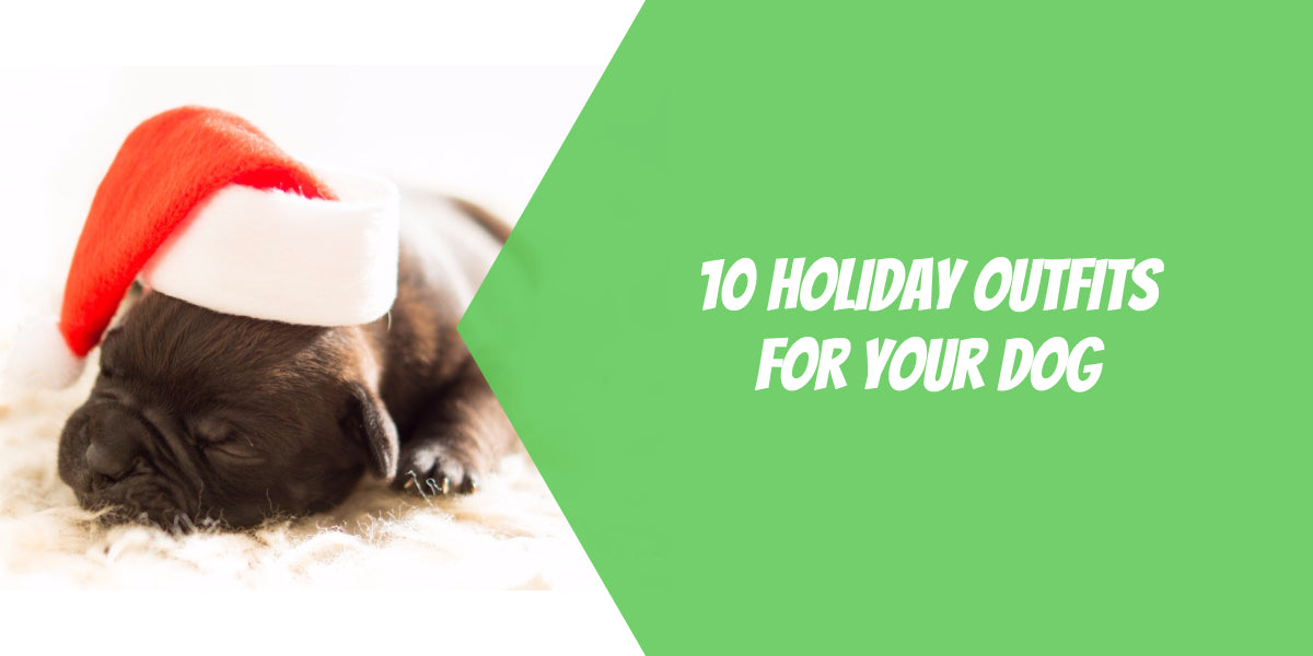 10 Holiday Outfits for Your Dog
