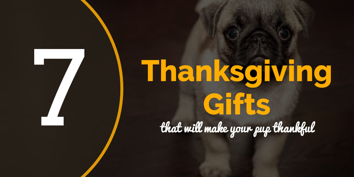 7 Thanksgiving Gifts to Make Your Pup Thankful for You