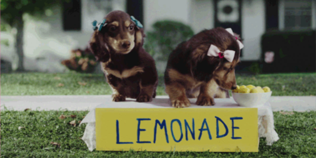 10 Times Puppies Were Cuter Than Life