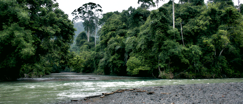 The Leuser Ecosystem Pristine Jungle. Image Courtesy of Rainforest Trust
