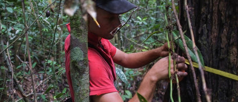 Local Forest Rangers in the Kluet Wildlife Reserve. Image Courtesy of Rainforest Trust