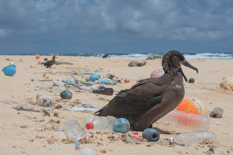 The Ocean Cleanup - sea bird