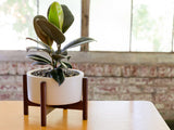 Modernica Inc - Desktop Case Study Planter White - Modern Anthology - 3