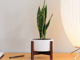 Modernica Inc - Desktop Case Study Planter White - Modern Anthology - 4