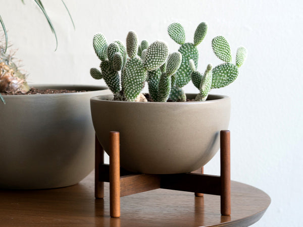 Modern Anthology - Desktop Case Study Planter Bowl - Home - Decor - Planter - Modern Anthology-