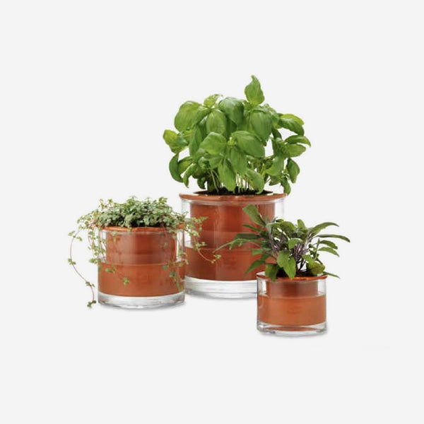 Aesthetic Movement - Self-Watering Planter - Habitat - Decor - Planter - Modern Anthology-