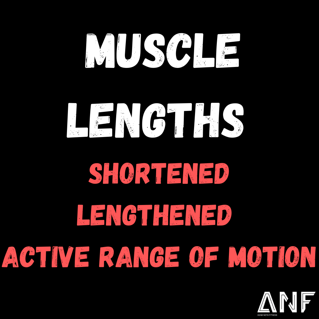 Muscle Lengths: The Basics