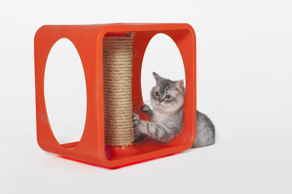 Kitty Kasa Cat House Gym
