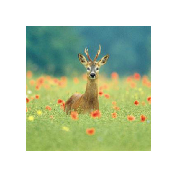 Roe Deer Greetings Card