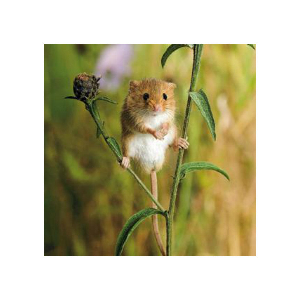 Field Mouse Greetings Card