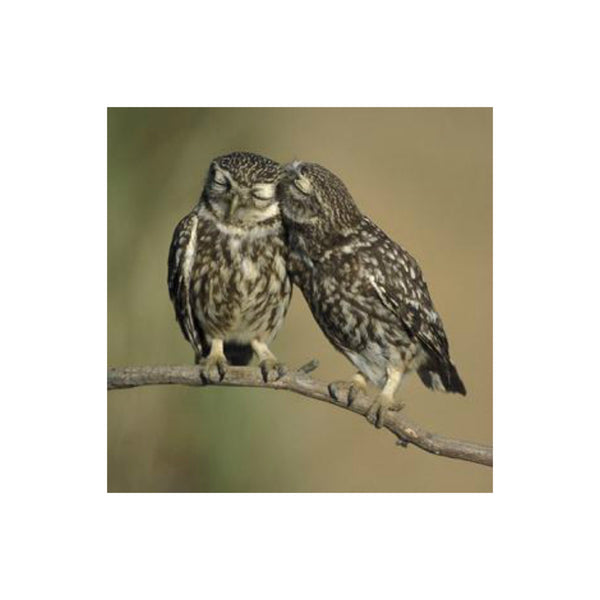 Little Owls Greetings Card