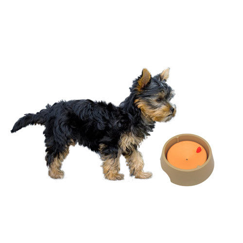 Korea Imported Pet Water Bowl - Mr Fluffy Singapore Online Pet Store