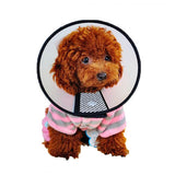 Elizabethan Collar Velcro Fastener - Mr Fluffy Singapore Online Pet Store