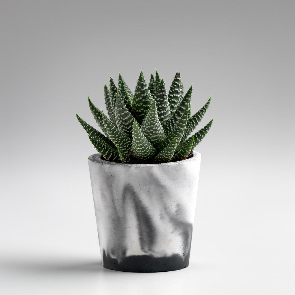 BLACK MARBLED CEMENT PLANTER