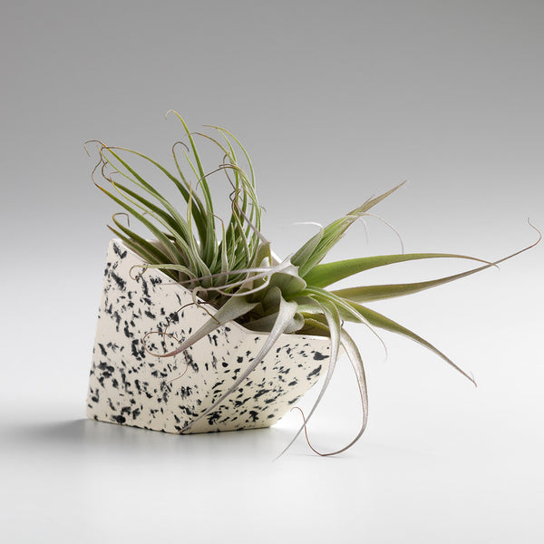 SIGG PAPER WEIGHT/PLANTER - BLACK SPECKLED