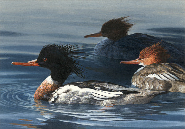 Redbreasted Mergansers