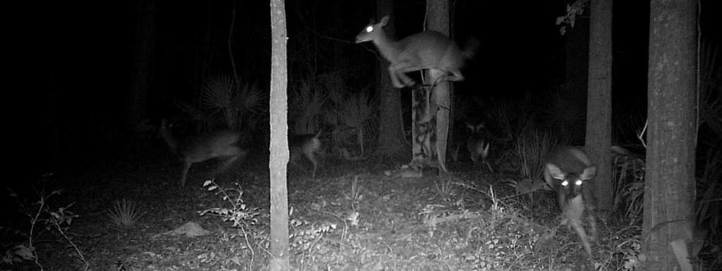 The Best Deer Deterrent of All: the Element of Surprise